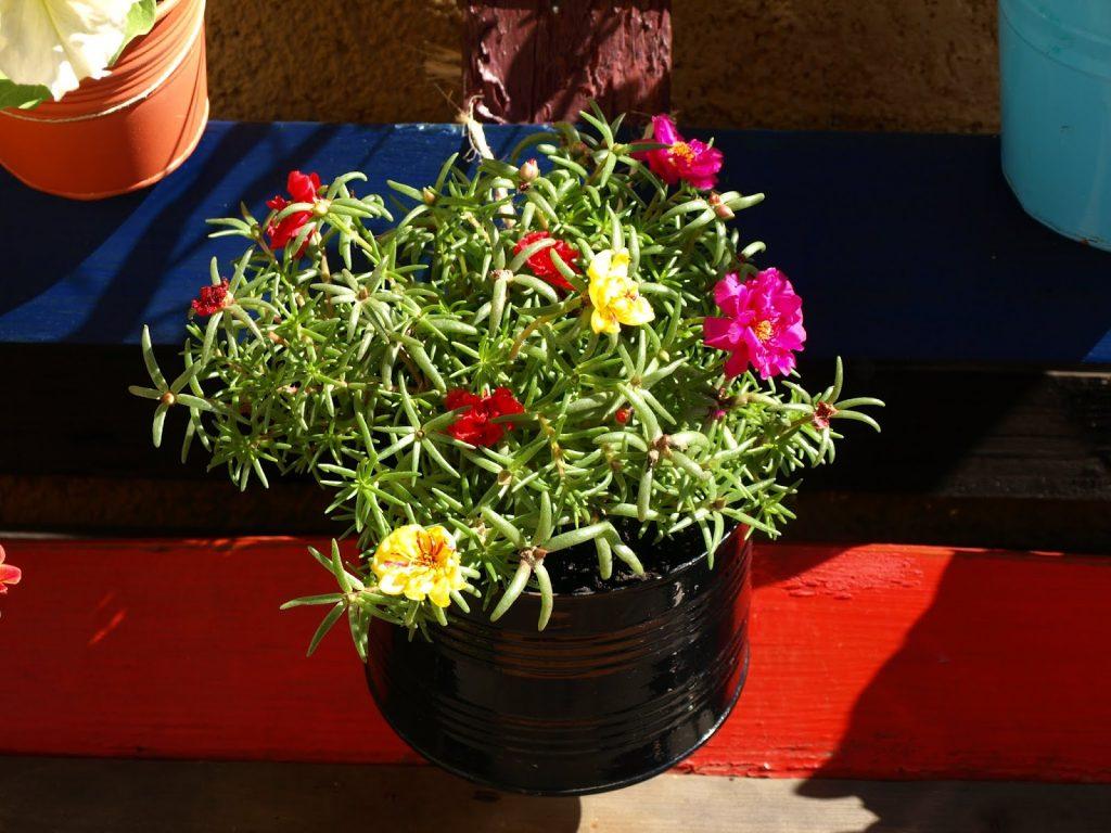 Φτιάχνουμε κρεμαστό κήπο από παλέτα