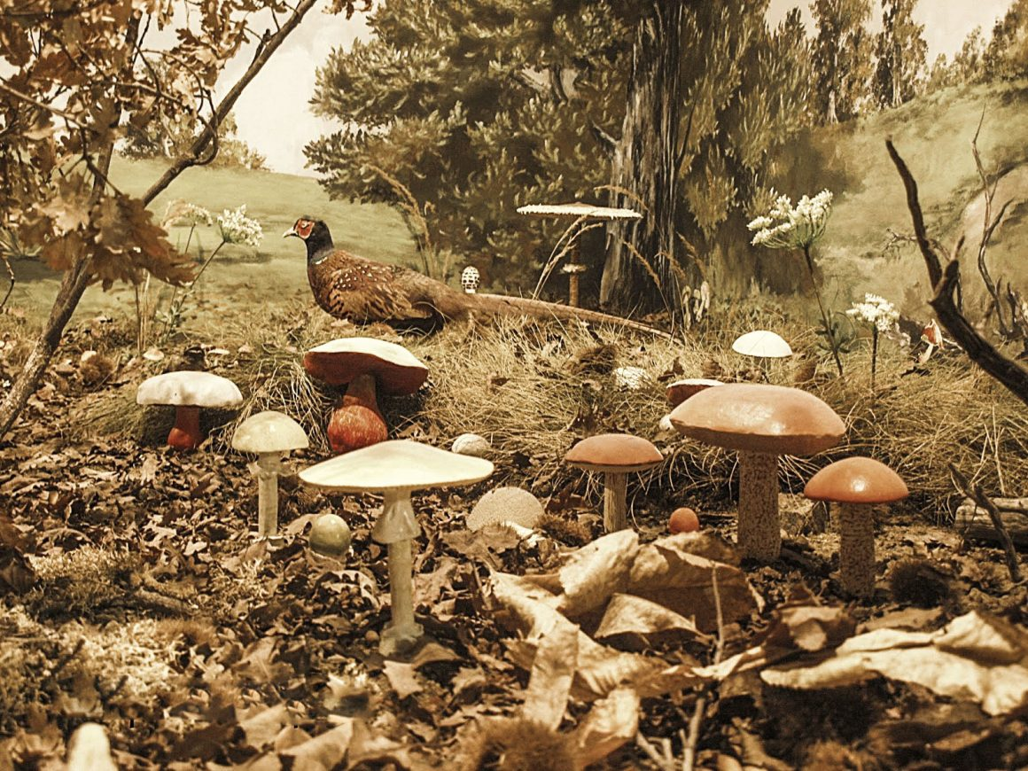 Μουσείο Φυσικής Ιστορίας Μετεώρων & Μανιταριών Καλαμπάκα